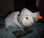 Elsa The SnowMan Guinea Pig - Christmas Present by SuperTheFluffyLizard
