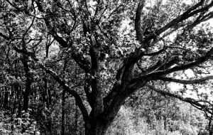 Tree In Black And White by rlgarrard