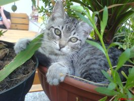 kitten in a flower pot by DaRealRelic
