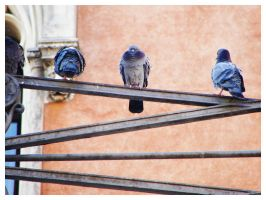 padovan birds by nutbucket