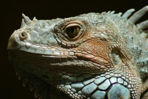 First Shooting with Reptiles 2 by TiTan666