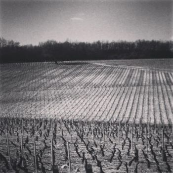 Vignes by Parinferal