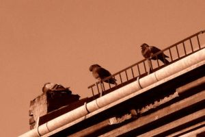 Little fellas on the roof by Ovca89