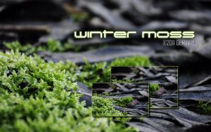 Winter Moss wallpaper pack by GeminiGM