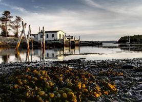 Low Tide by CanonSX20