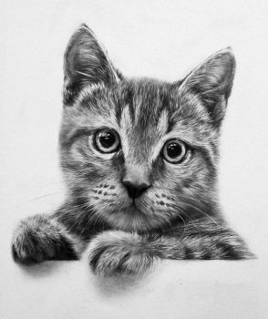 Cat by CubistPanther