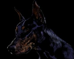 Doberman Scratchboard by Sue-Nami