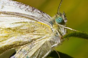 Oxbow Preserve Lepidopteran by sellsworth