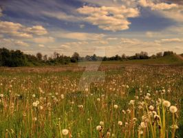 Meadow 2 by ydwoR