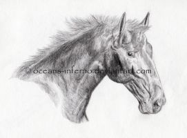Pencil horse by oceans-inferno