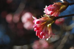 First Blossoms by RowanLewgalon