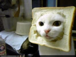 bread cat is hungry by perrorist
