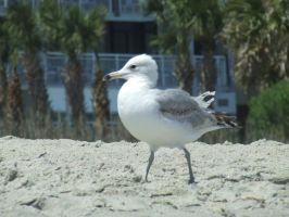 Seagull by StockRush