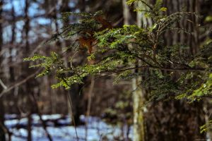 Branches- Muttontown Preserve by WickedOwl514
