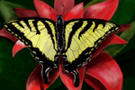 Butterfly on a red flower by davincipoppalag