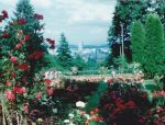 Rose Garden by princesssudi