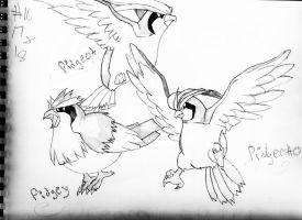 Pidgey Series by DOaks7