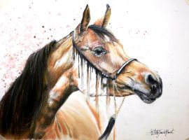 The arabian by thefrenchberet