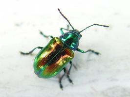 Colorful Beetle by Tjpower11