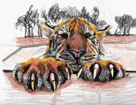Tiger Drawing - Stephen Michael Jones by smjblessing