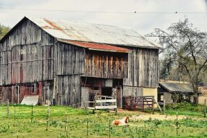 Pretty Horse in Front Of Old Rustic Barn by SeeThruMineEyes