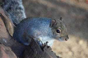 Squirrel by Metaporic