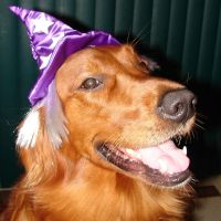 Francis Wizard Dog Costume 2 by FantasyStock