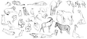 Animal Life Drawings by silentillusion