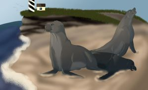 Sea lions by Snowfirewolf