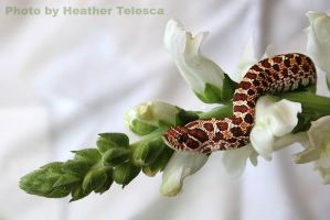 Snake Flower by HeatherTelesca