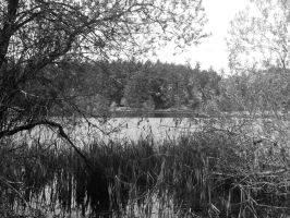 tree with lake by eyannaandkianalovesu