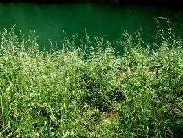 Grass and Water by cessar