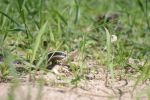 Snake in the Grass by NooMoahk