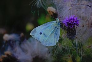 Butterfly and Thistle by CoyoteChoir