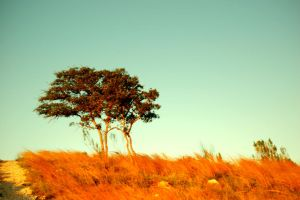 Safari Sunsets in The Hills by brytts-gotno-wytts