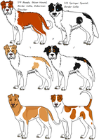 Three-Eighths Border Collie Mixes by Leonca