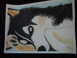 Wolf- Water Color Painting by jamiethehedgehog737