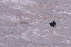 Assignment3-Requirement3: Bugs by SaraElhamdaoui