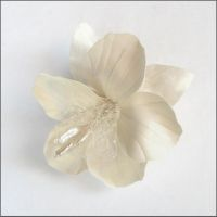 Small White Hibiscus by tracyholcomb