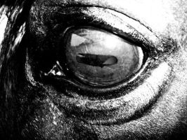 A horse's eye by WandaFalke