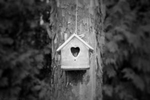 birdhouse by chelsea-martin