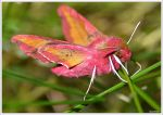 Encounter with a mysterious pink butterfly by KlaraDrielle
