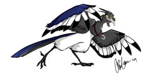 Magpie by Clairictures