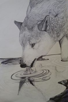 Wolf and the river (in process) by Wolfgirl885
