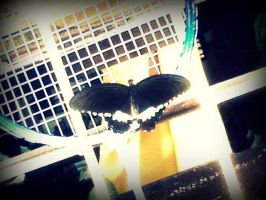 Butterfly resting on a racket by RainyEndings13
