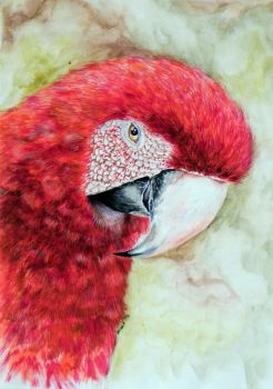 Red Parrot - Small Magnet by Pauchilei