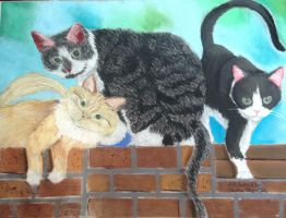 My Cats by brynhildr13