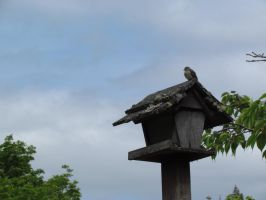 Bird on a Moderately Warm Wood Roof by SubRosa-undertherose