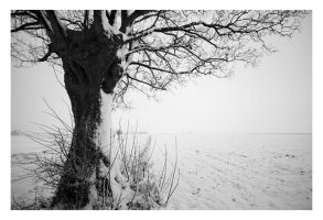 After The Snow, Outside II by krush