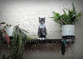 Minette in the rain by April-Mo